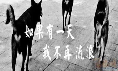 2019年国家公务员考试申论热点:流浪犬管理考验社会管理水平