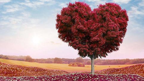 栽一棵树最好的时间是十年前,其次是现在